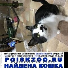 Найден кот боярский г.Москва