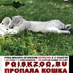 Пропал кот вислоухий  г.Фирсановка