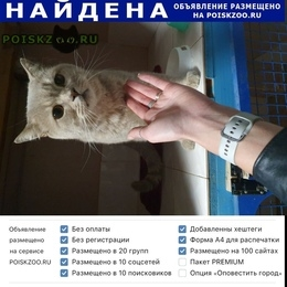 Найден кот г.Воронеж