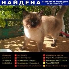 Найден кот г.Феодосия