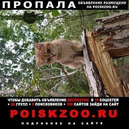 Пропала кошка выпала с балкона г.Краснодар
