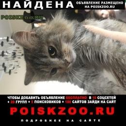 Найдена кошка кто потерял ? с ошейником г.Подольск