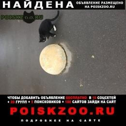 Найдена кошка ищет дом. г.Москва
