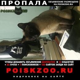 Пропал кот Павловск (Ленинградская обл.)