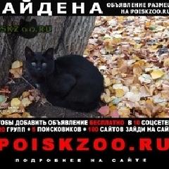 Найден кот черная или кошка г.Москва