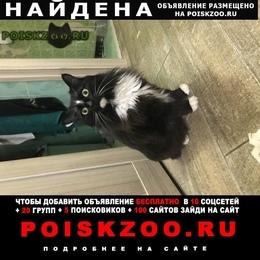 Найдена кошка тёплый стан г.Москва