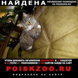 Найдена кошка район м.баррикадная или м. маяковская г.Москва
