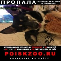 Пропала собака убежала на улице керченской г.Москва
