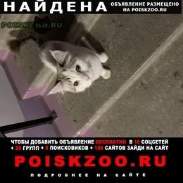 Найдена кошка г.Сургут