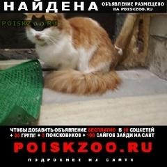 Найдена кошка рыжая кошечка г.Ижевск