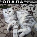 Пропала кошка г.Иваново