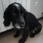 Найдена собака кобель г.Иркутск