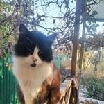 Найдена кошка потеряшка г.Ростов-на-Дону