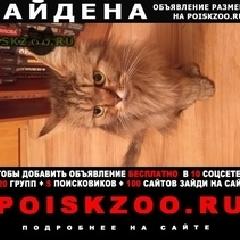 Найден кот г.Новокузнецк