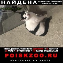 Найдена кошка черно белая г.Екатеринбург