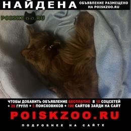 Найден кот чёрный г.Москва