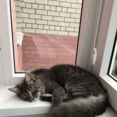 картинка найдена кошка