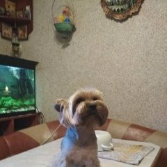 картинка найдена собака