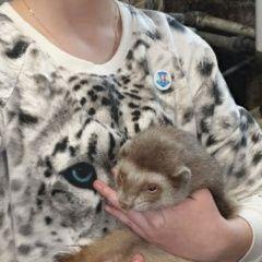 картинка найдено другое животное