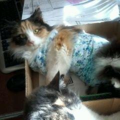 Пропал потерялся кот член семьи кривой рог