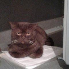 картинка пропала кошка
