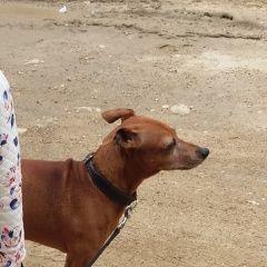 картинка пропала собака