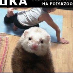 картинка пропало другое животное