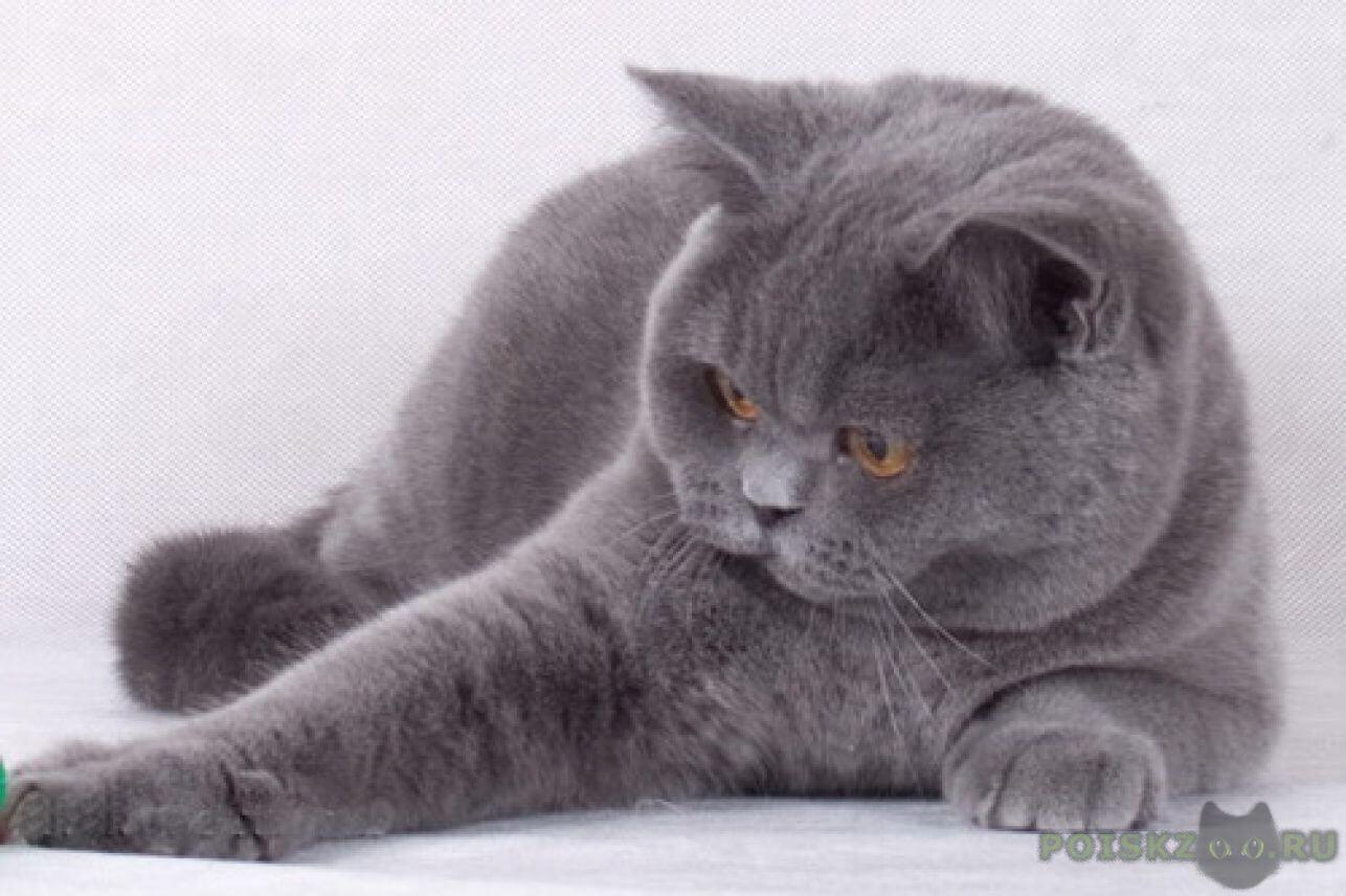 Кот очень