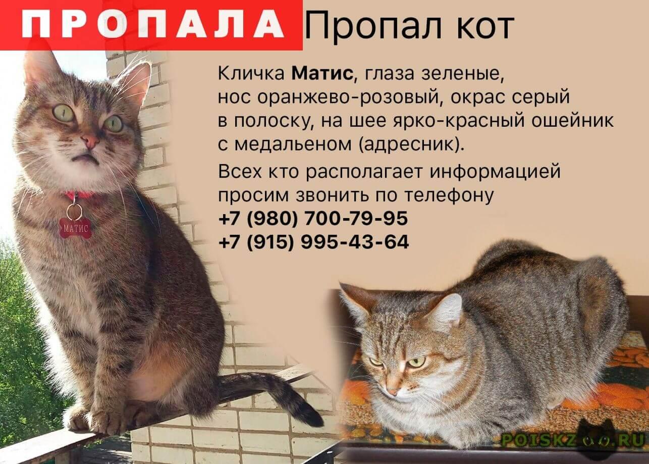Пропал кот Вознаграждение 5000 руб. г.Ярославль, матис, серый в полоску, на шее ярко-красный ошейник с медальеном (адрески).каст