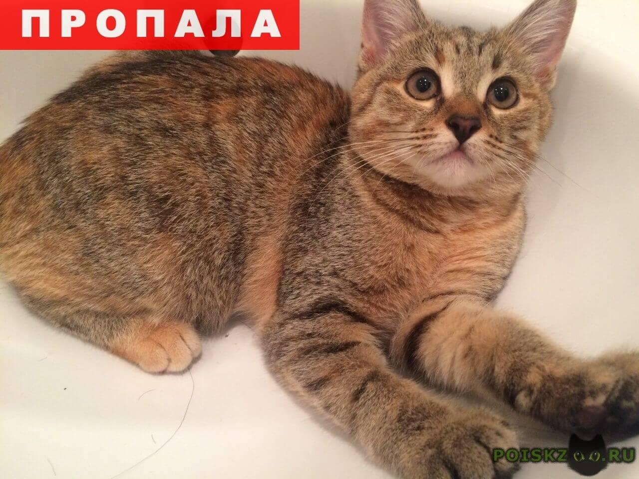 кошки рязань фото